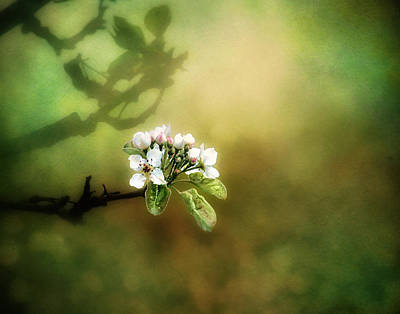 Baby Digital Art - Spring Buds by Moon Stumpp