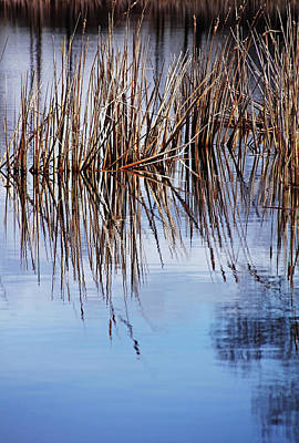 Photograph - Spring Bulrush by Debbie Oppermann