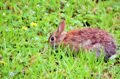 Photograph - Spring Bunny by Kerri Farley