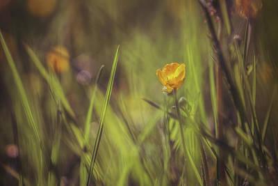 Buttercup Photograph - Spring Buttercup by Chris Fletcher