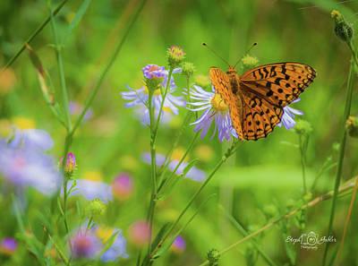 Spring Butterfly Art Print