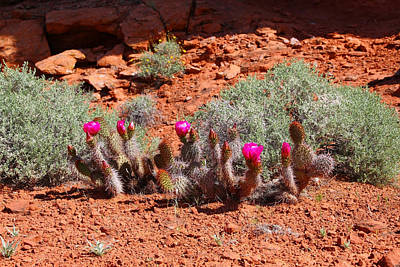 Photograph - Spring Cactus by Sharon I Williams