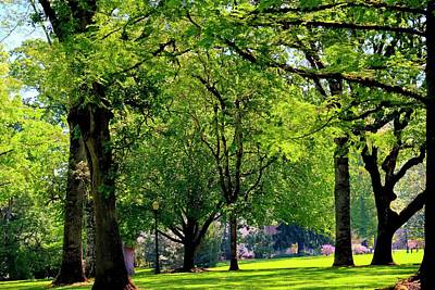 Photograph - Spring Campus by Jerry Sodorff