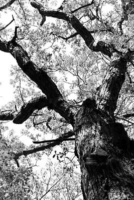 Photograph - Spring Canopy 2 Bw 052318 by Mary Bedy