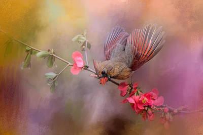 Birds With Flowers Photograph - Spring Cardinal 2 by Jai Johnson