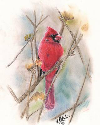 Pastel - Spring Cardinal by Christian Conner