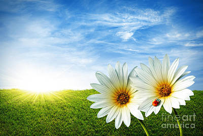 Sunny Photograph - Spring by Carlos Caetano