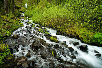 Green Forest Photograph - Spring Cascades by Mike  Dawson