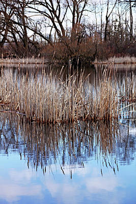 Photograph - Spring Cattails by Debbie Oppermann