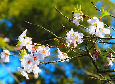 Photograph - Spring Cherry Blossoms 2 by Bonnie Follett