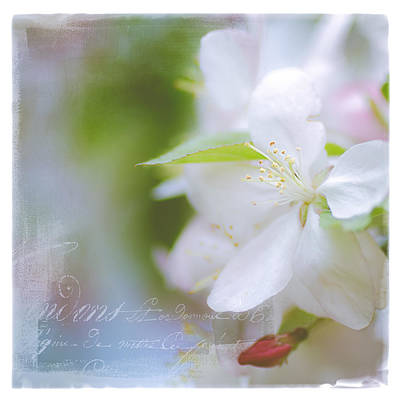 Photograph - Spring Cherry Blossoms by Julie Palencia