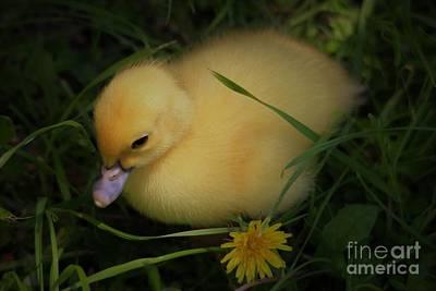 Spring Chick Art Print by Paulette Thomas
