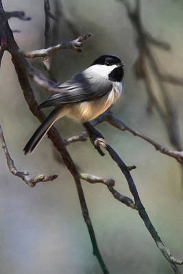 Chickadee Digital Art - Spring Chickadee 1 by Lori Deiter