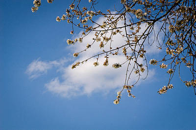 Cherry Blossom Photograph - Spring Cloud by Andy Smy