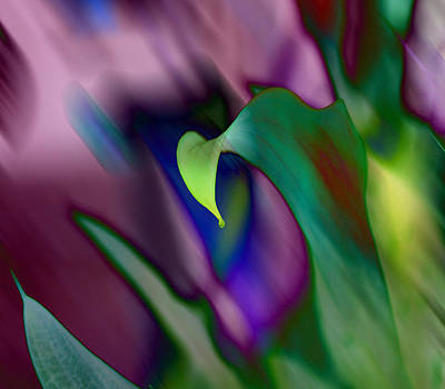 Florida Digital Art - Spring Colors 1 by Evelyn Patrick