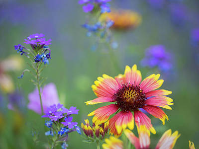 Photograph - Spring Colors by Sue Cullumber
