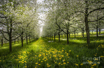 Photograph - Spring Colors1 by Bruno Santoro