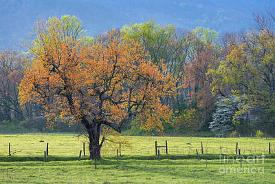 Photograph - Spring Colrs, Cades Cove by Anthony Heflin