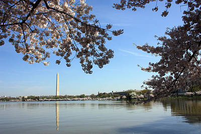 Photograph - Spring Comes To Washington by Mary Haber