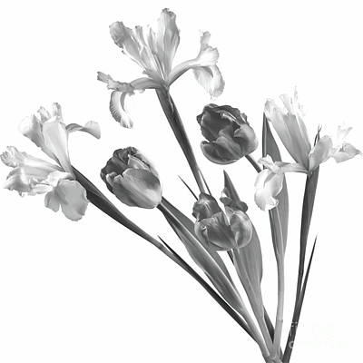 Photograph - Spring Composition Irises And Tulips by Olga Hamilton