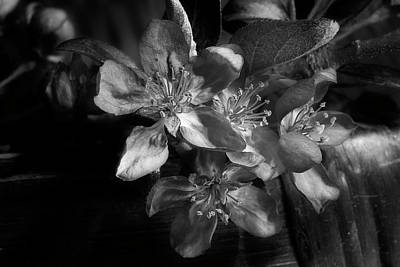 Photograph - Spring Crabapple 2 by Mike Eingle