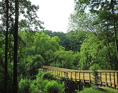 Photograph -  South Peachtree Creek Trail At Druid Hills Atlanta by Lizi Beard-Ward