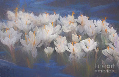 Mixed Media - Spring Crocuses by Helen White