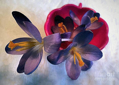 Photograph - Spring Crocuses  by Janice Drew