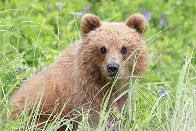Photograph - Spring Cub by Jack Bell