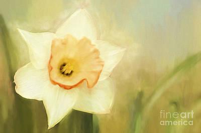 Spring Daffodil Art Print