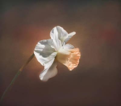Photograph - Spring Daffodil by Kim Hojnacki