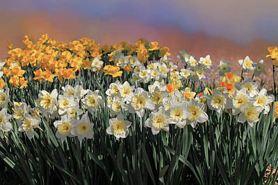 Photograph - Spring Daffodils by Donna Kennedy