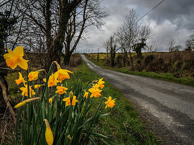 Photograph - Spring Daffodils On An Irish Country Road by James Truett