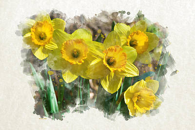 Mixed Media - Spring Daffodils Watercolor Art by Christina Rollo