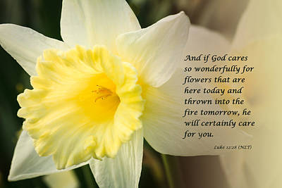 Photograph - Spring Daffodils Wtih Scripture by Joni Eskridge