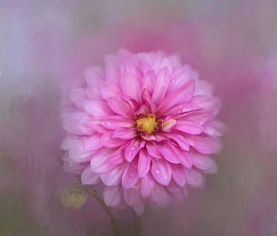 Photograph - Spring Dahlia by Kim Hojnacki