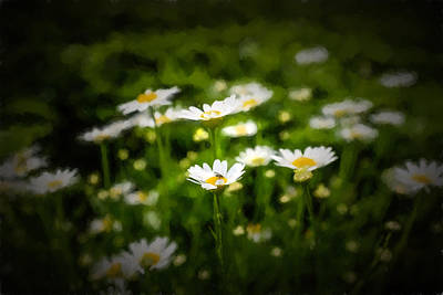 Photograph - Spring Daisies  by Chris Bordeleau