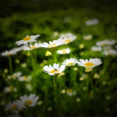 Photograph - Spring Daisies - Square by Chris Bordeleau