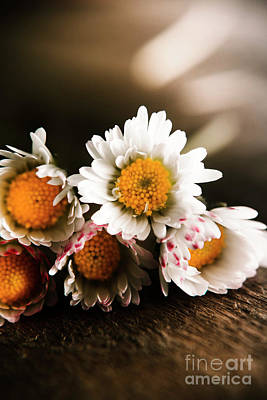 Photograph - Spring Daisy Sentiment by Jorgo Photography - Wall Art Gallery
