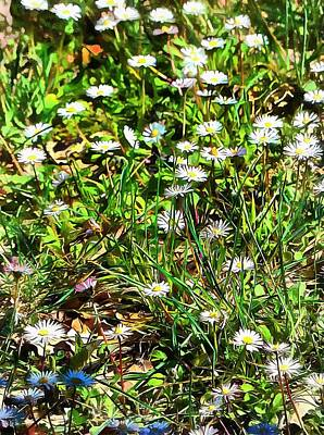 Photograph - Spring Daisy Trails by Dorothy Berry-Lound
