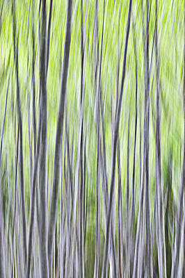Tree Photograph - Spring Dance Of The Alder-motion Abstract by Ed Book