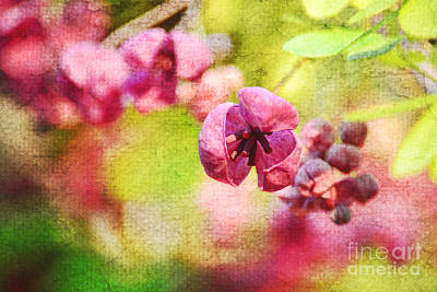 Photograph - Spring Delight by Kelly Nowak