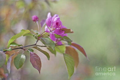 Flower Photograph - Spring Delight by Maria Ismanah Schulze-Vorberg