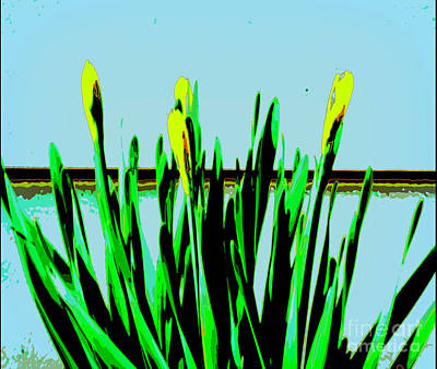 Photograph - Spring by Diane montana Jansson