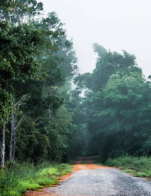 Photograph - Spring Dirt Road by Shelby Young
