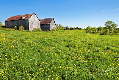 Photograph - Spring Double Barns by Alan L Graham