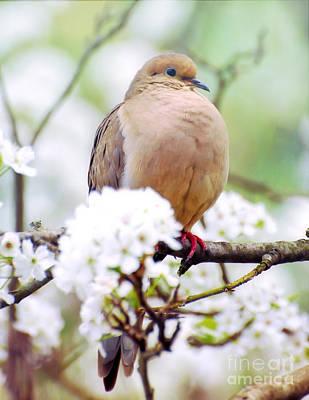 Photograph - Spring Dove 2 by Kerri Farley