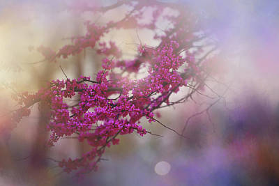 Photograph - Spring Dream I by Toni Hopper