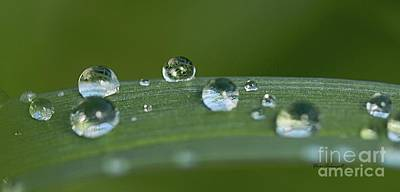 Photograph - Spring Droplets by Yumi Johnson