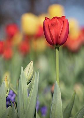 Photograph - Spring Elegance by Teresa Wilson